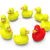 one red duck in circle of yellow ducks